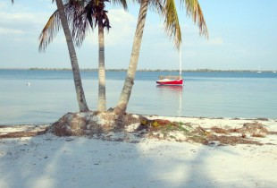 Coconut Palms with Boat