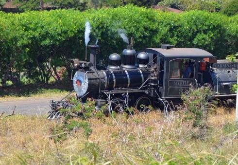 Sugarcane Train