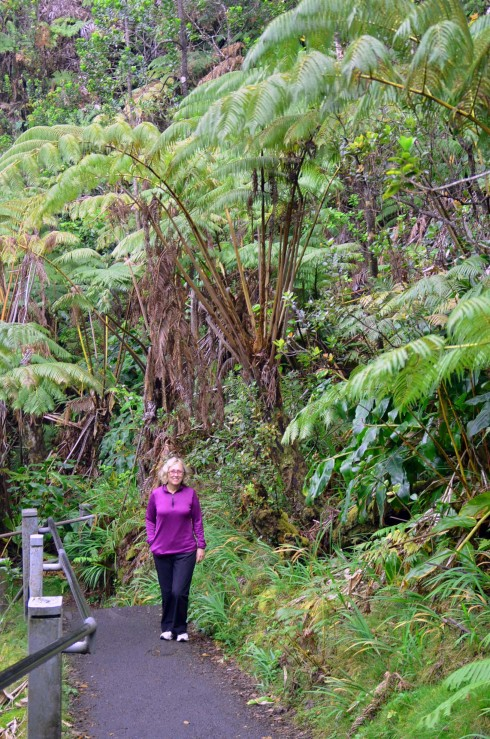 Amidst the Giant Ferns
