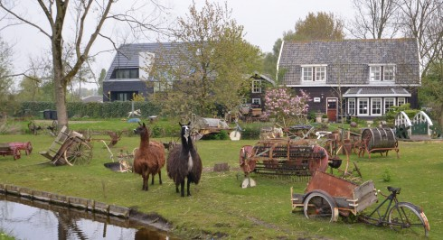 Haarlem llamas