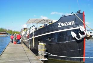 The Zwaan