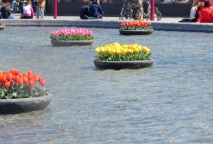 Tulips, Museumplein Amsterdam