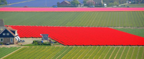 Bulb Fields from the dunes