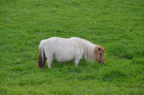 Child's Pony