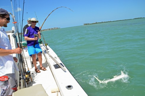Landing a lemon shark
