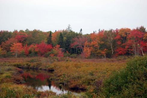 Autumn Beaver Dam Creek