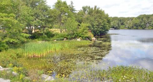 Cattails in Five Island Lake