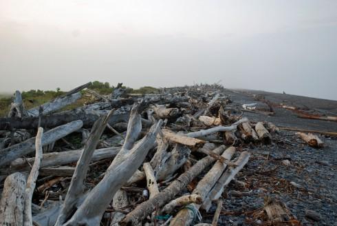 Driftwood at Driftwood Retreat