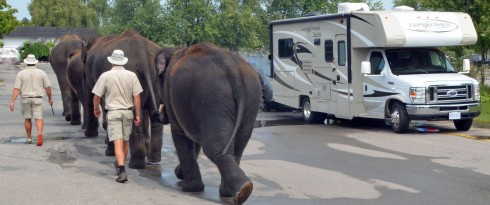 Elephants and RV
