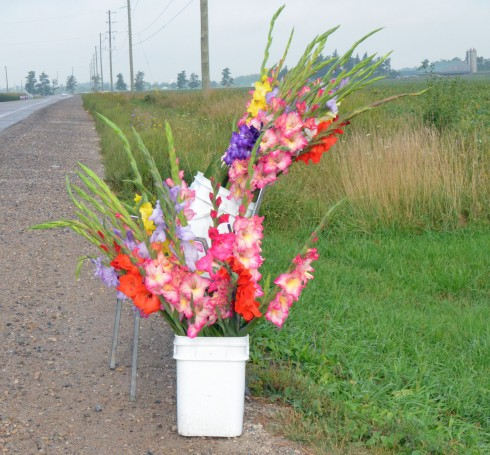 Glads for sale