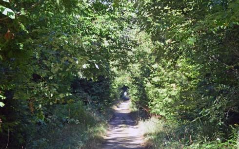 The Kissing Bridge Trail