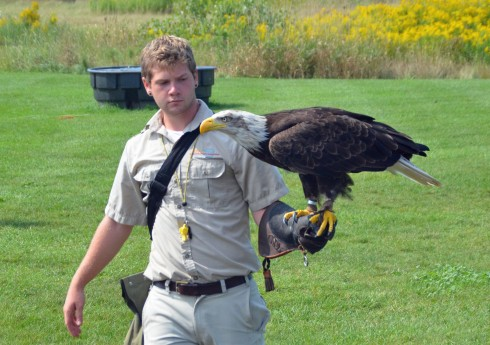 Trained Bald Eagle