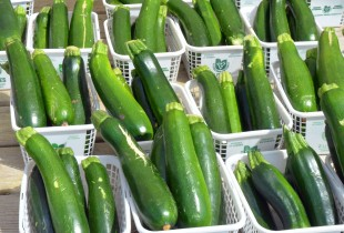 Zucchini for sale