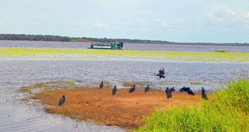 Airboat and Vultures