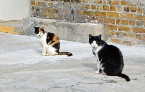 The Fort's Permanent Residents