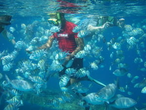 Surrounded by fish in Carlisle Bay