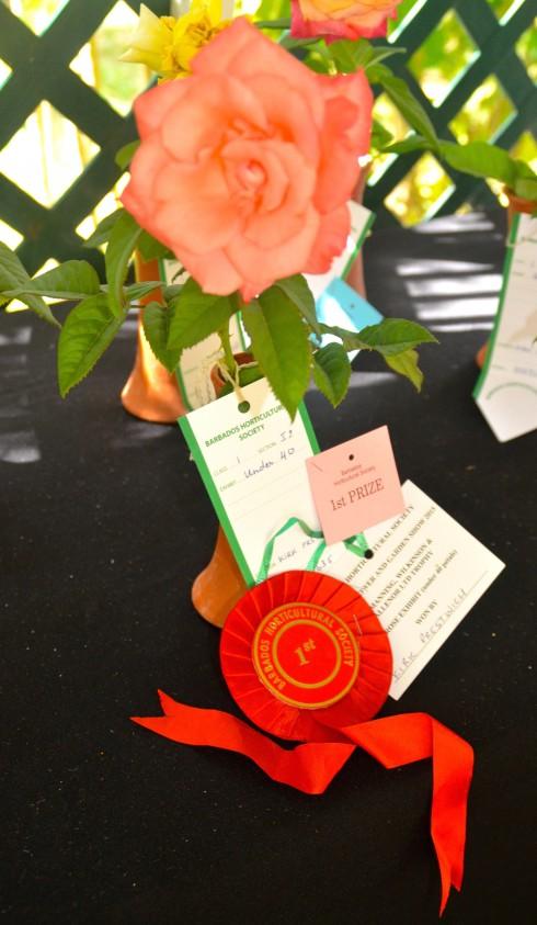 Award Winning Rose