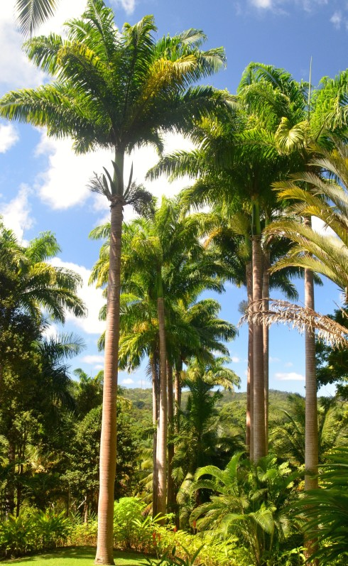Magnificent palm stand, Flower Forest, Barbados