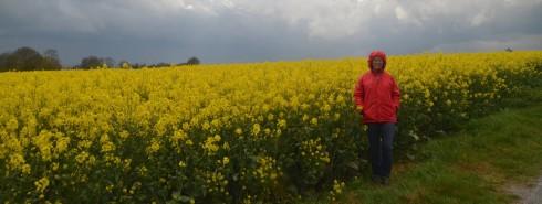 Mustard Field at Longues-sur-Mer