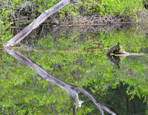 Otter Pond, Six Mile Cypress
