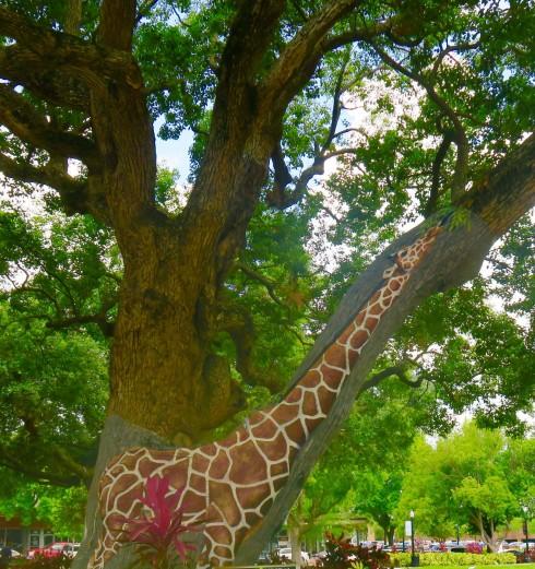 Giraffe, Munn Park, Lakeland Florida