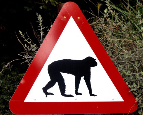 Monkey sign on the Rock of Gibraltar