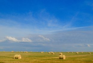 Bales under Saskatchewan Sky