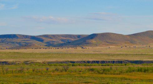 Grasslands National Park Bison Herd