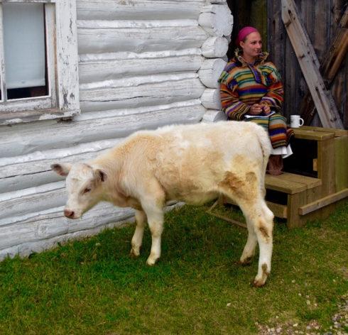 Nappy the Calf