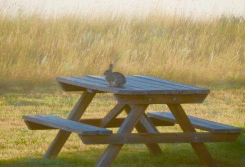 Rabbit on a Picnic Table