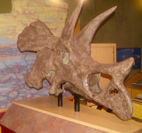 Triceratops Skull, T. rex Centre, Eastend Saskatchewan