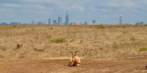 Nairobi Skyline with a Hartebeest