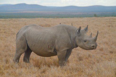 Black Rhino, Sweetwaters Camp