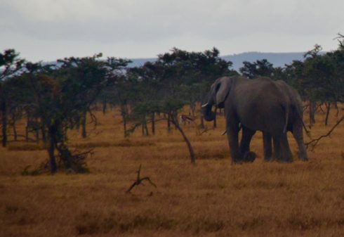 Retreating Elephants