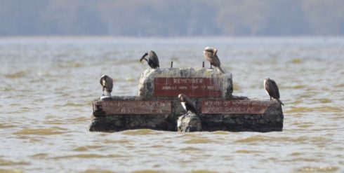 Cormorants on Old Road Marker, Lake Nakuru