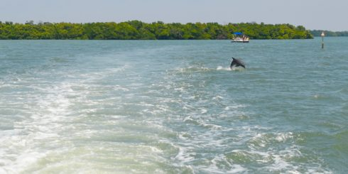 Frolicking Dolphin