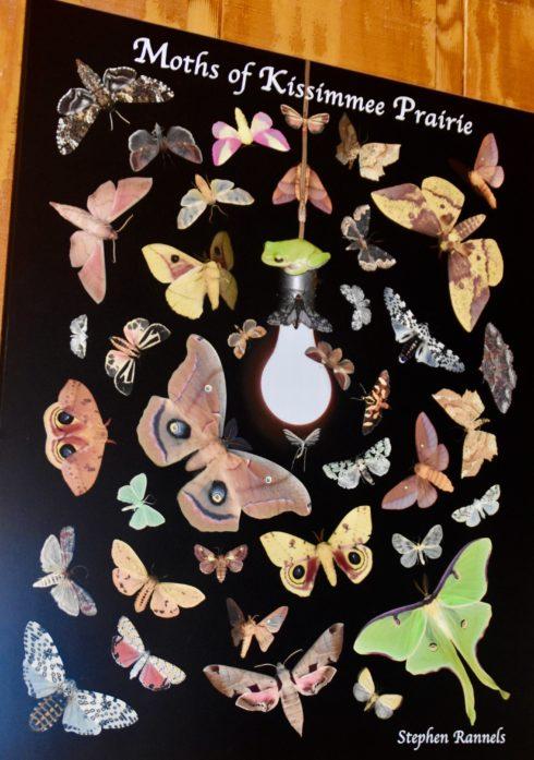 Moths of Kissimmee Prairie