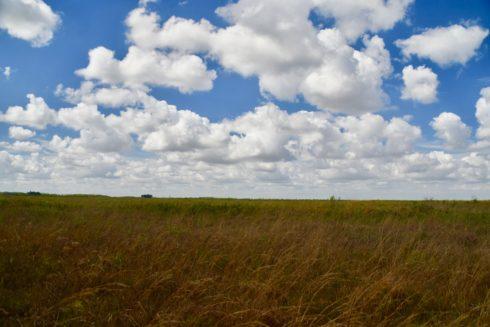 Original Dry Prairie, Kissimmee Prairie Preserve