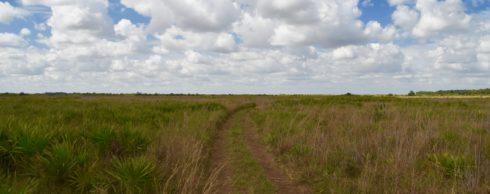 Path Through the Prairie, KIssimmee Prairie