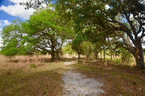 Prairie Loop Trail, Kissimmee Prairie