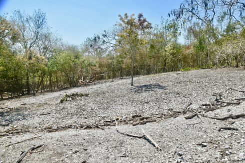 Shell Mound Clearing, Mound Key