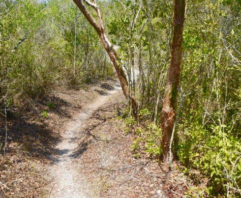 The Mound Key Trail