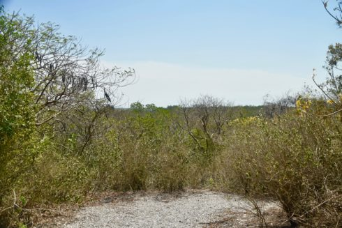 View FRom the Highest Mound, Mound Key