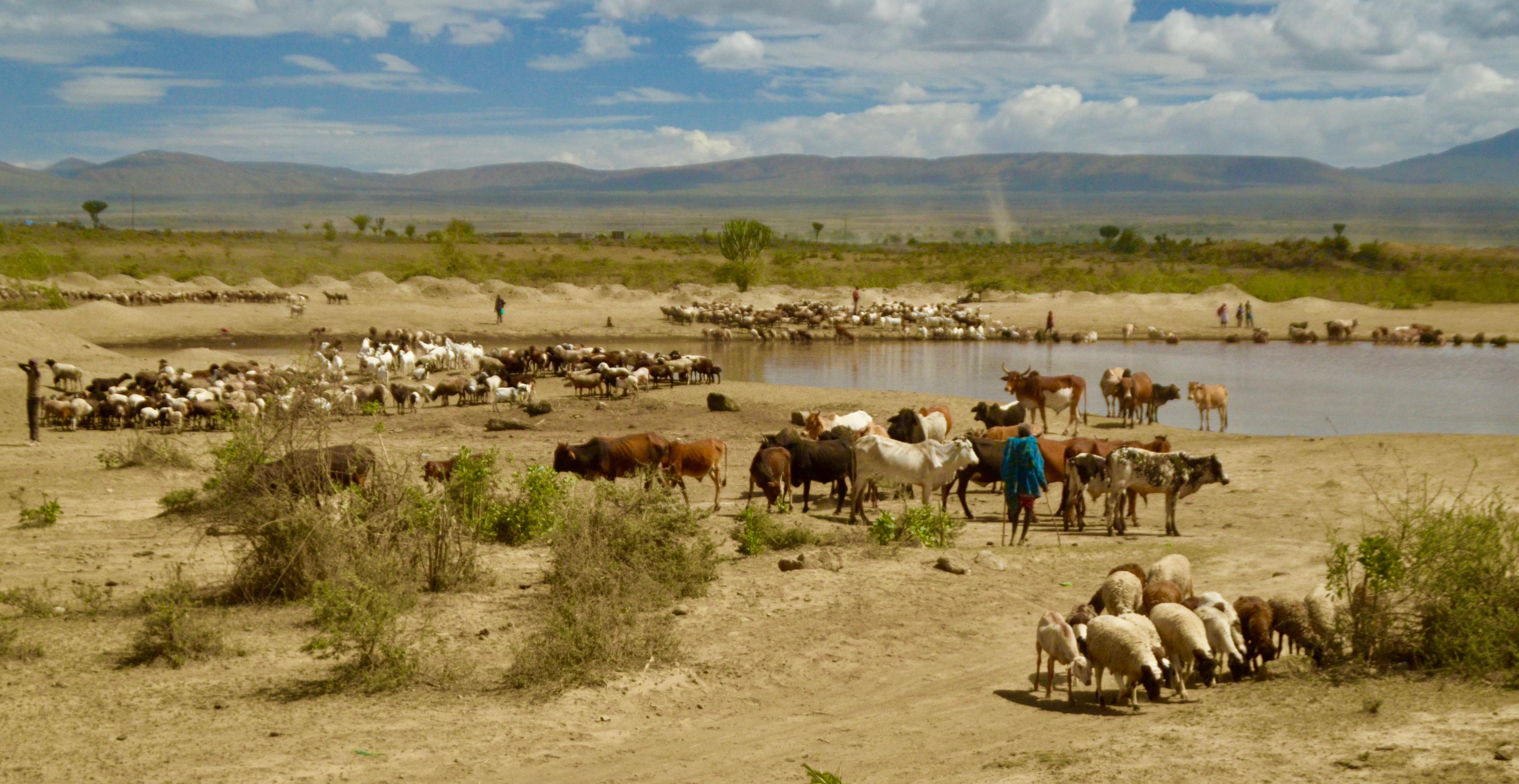 Masai Waterhole