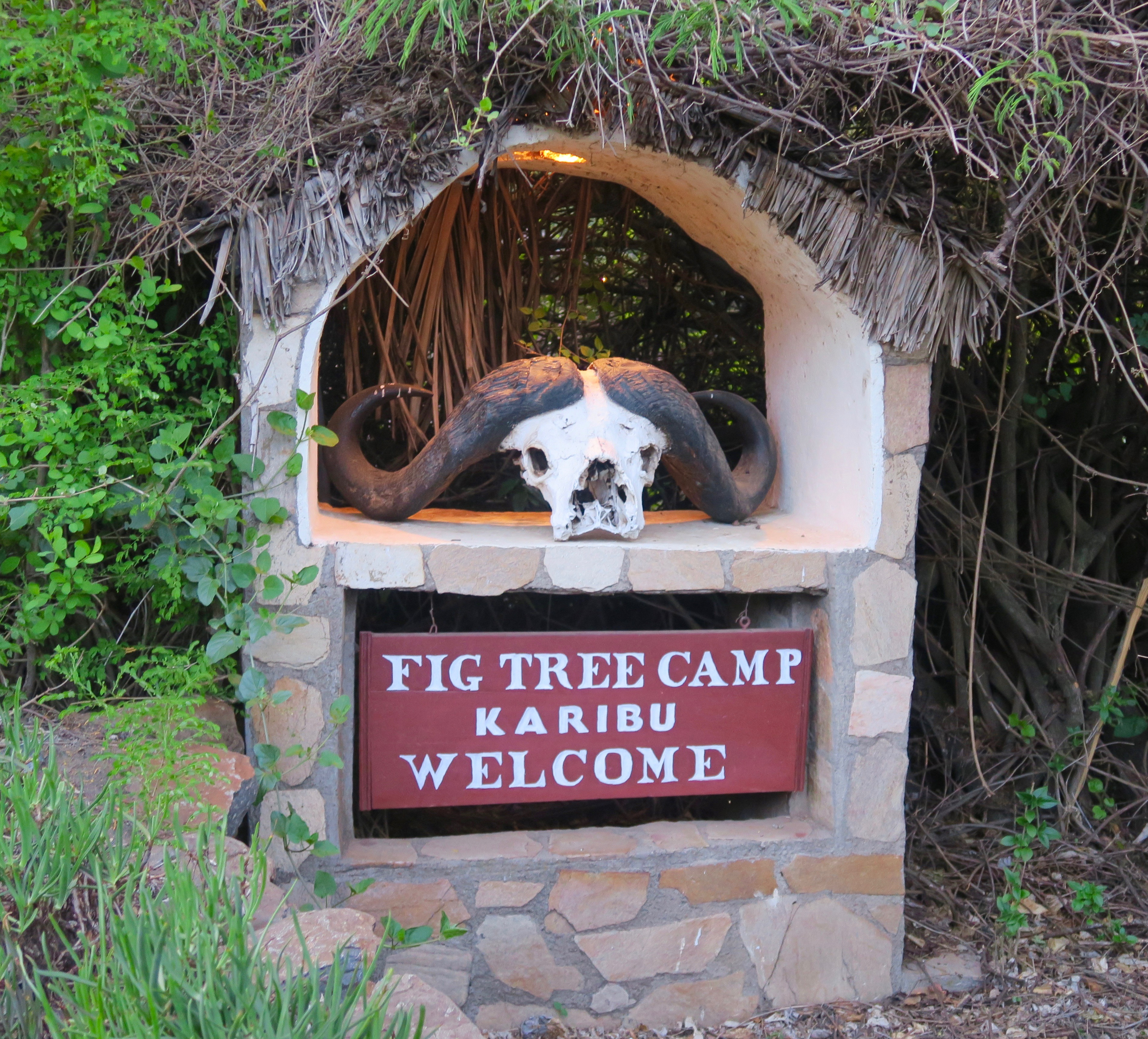 Welcome to Fig Tree Camp, Masai Mara