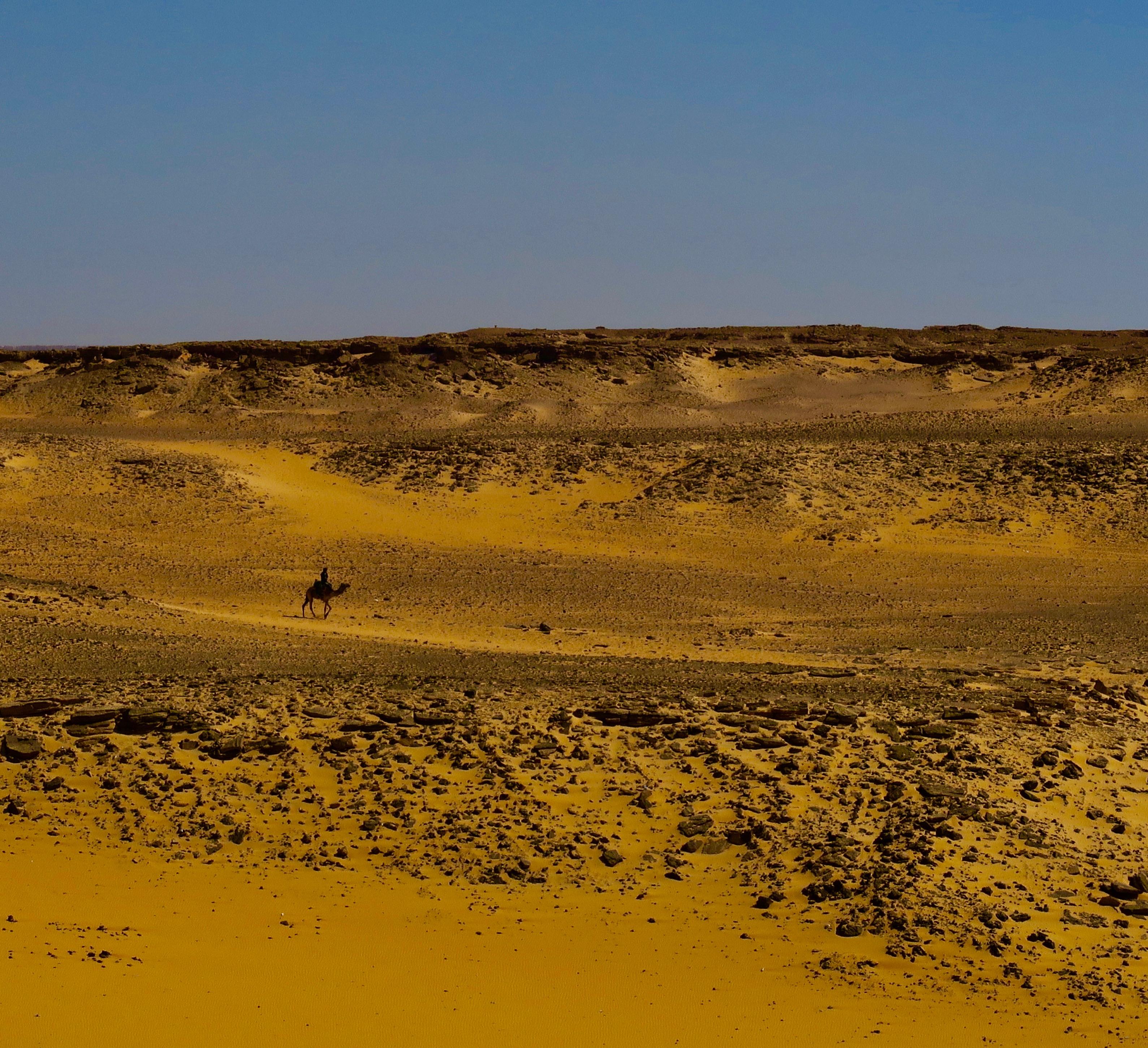 Lone Camel Rider