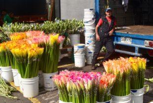 Calla Lily Vendor, Bogota Market