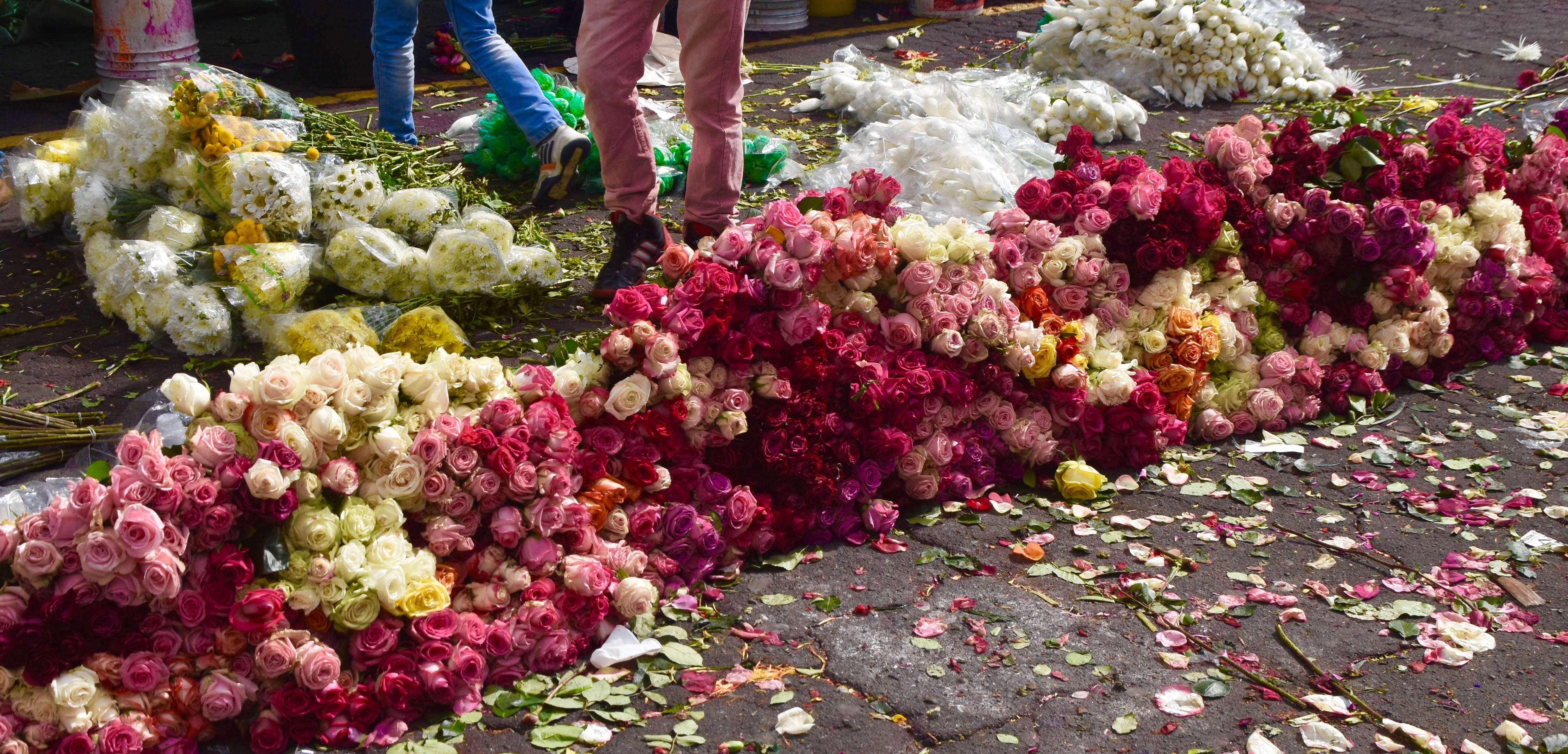 Left Over Roses, Bogota Market