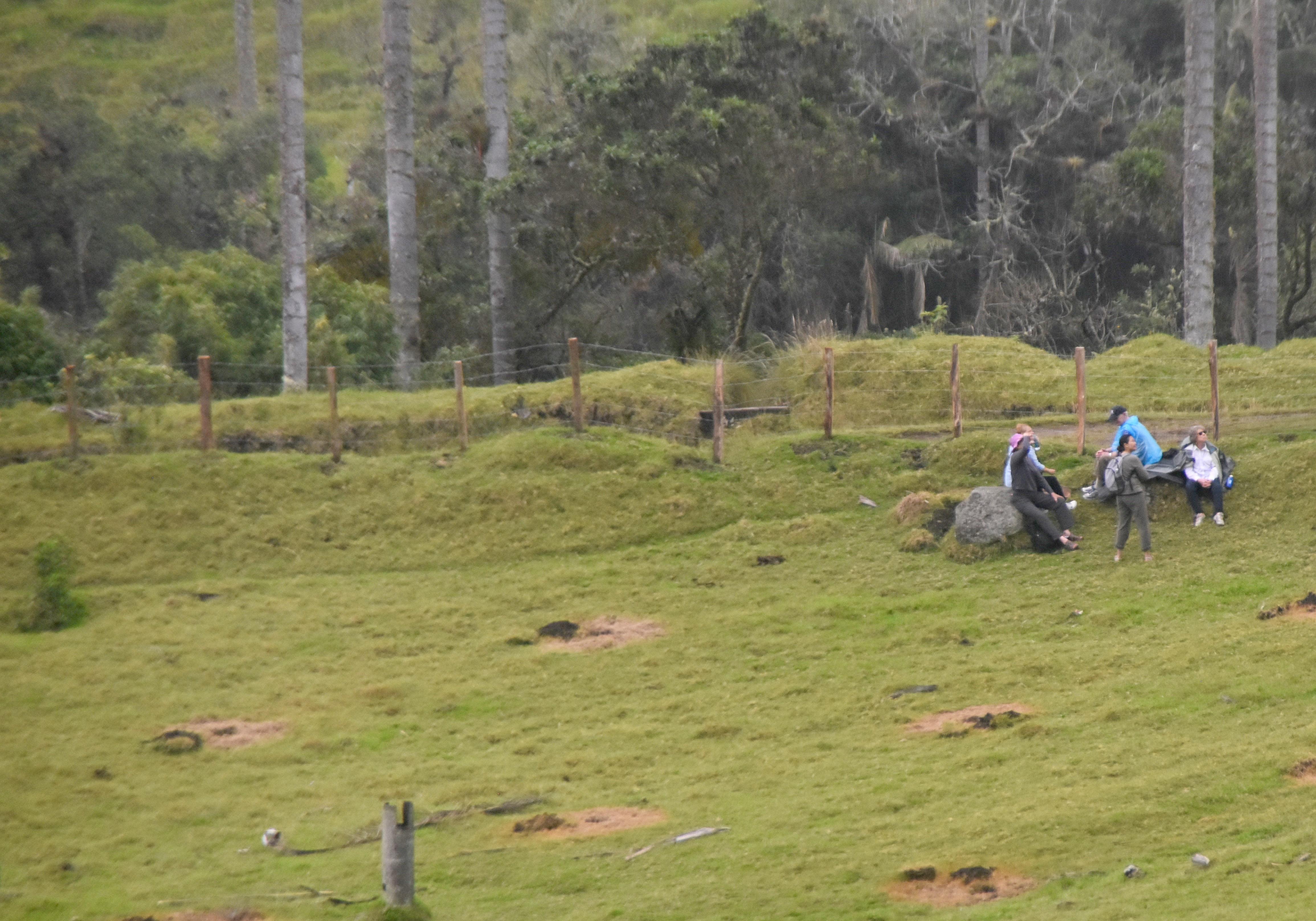 Rest Break in the Valle de Cocora