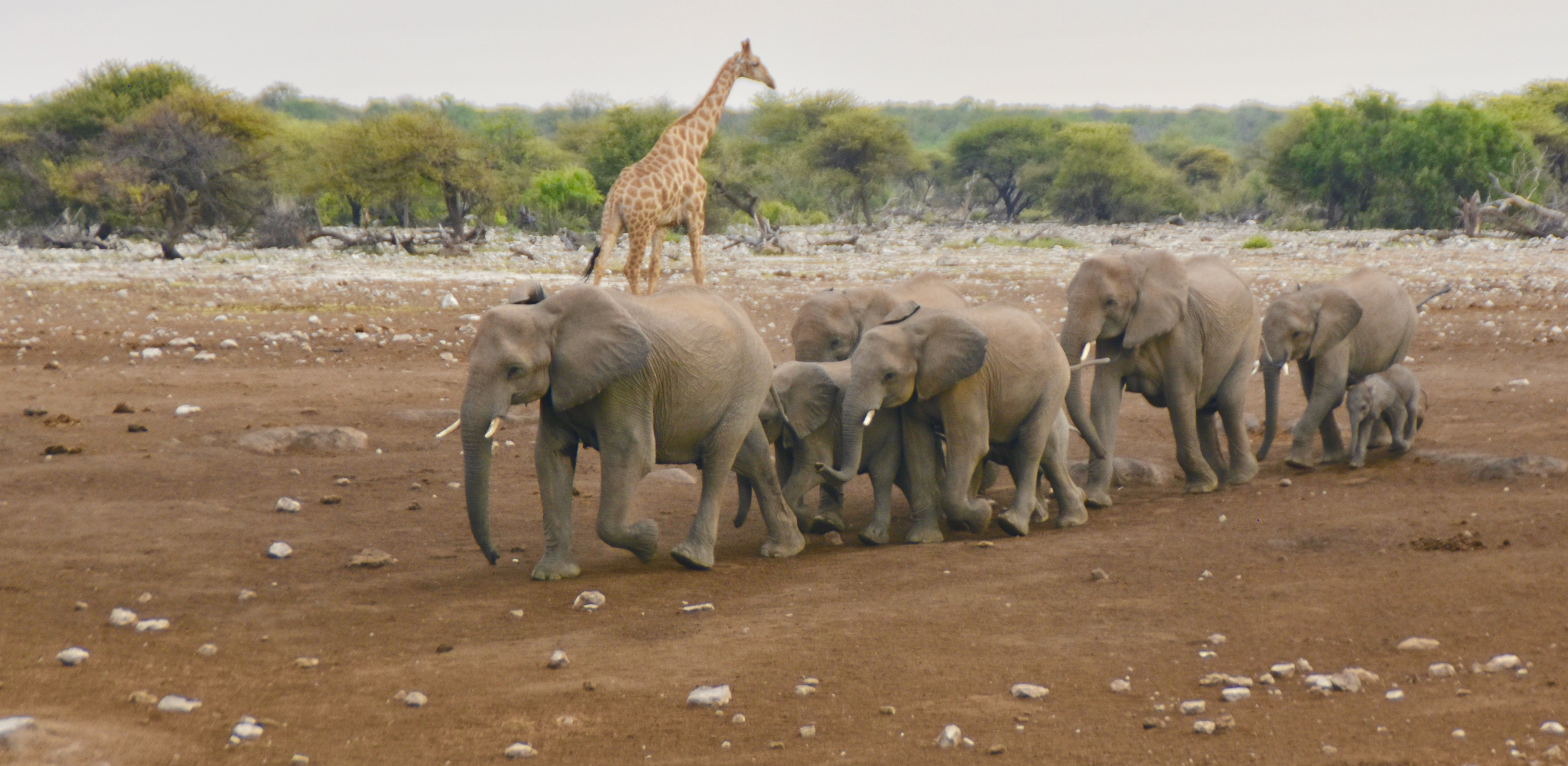 Exploring Namibia Elephants